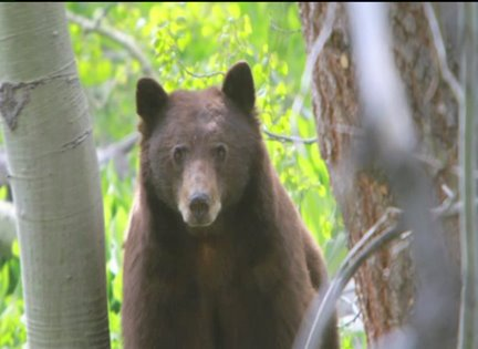 Statelines Complicating Battle over Bear Traps