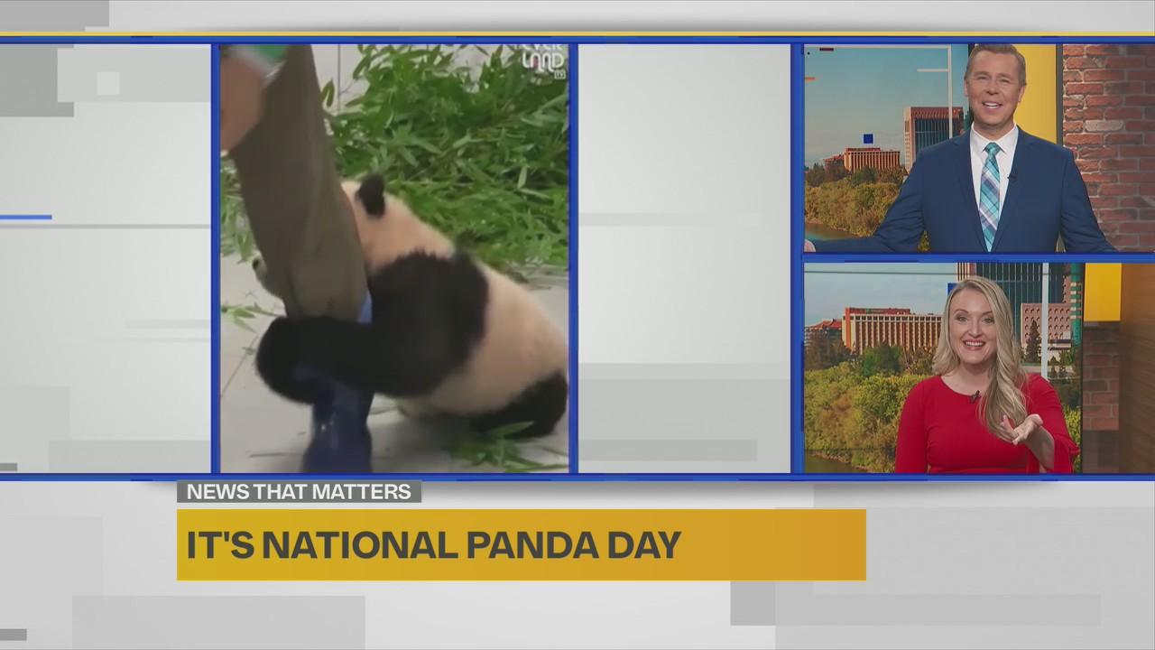 National Panda Day jpeg?w=1280.